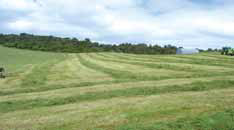 field of silage